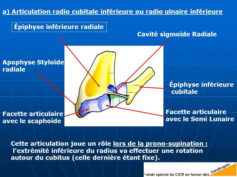 a) Articulation radio cubitale inférieure ou radio ulnaire inférieure