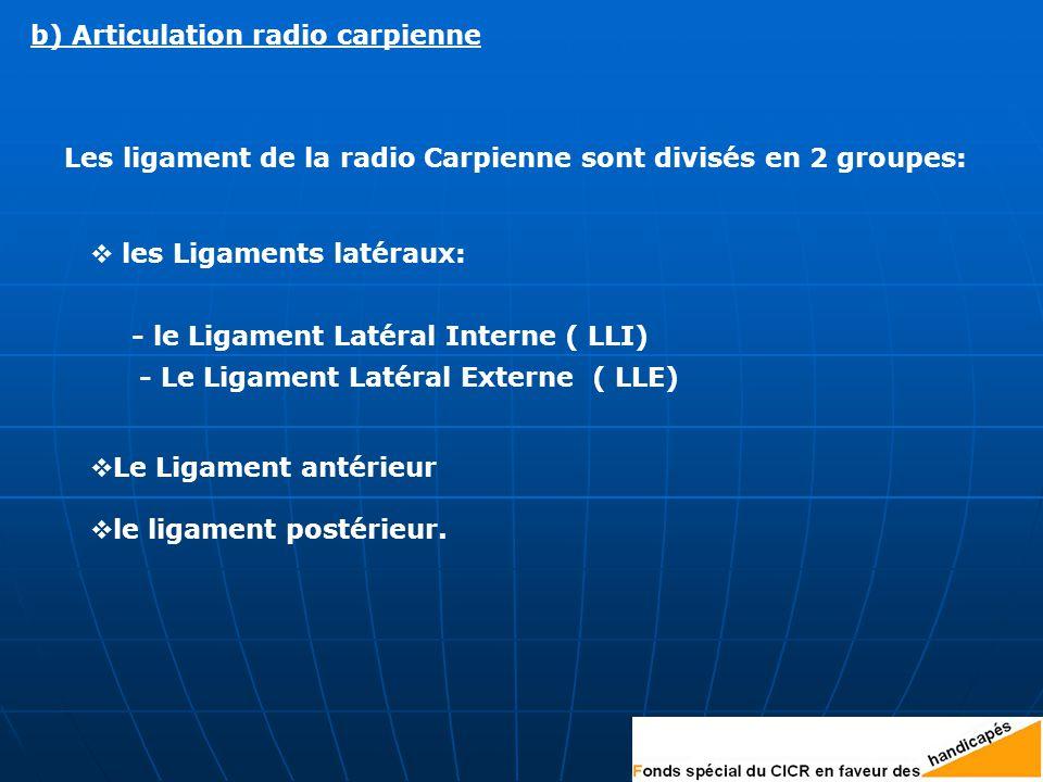 Les ligament de la radio Carpienne sont divisés en 2 groupes: