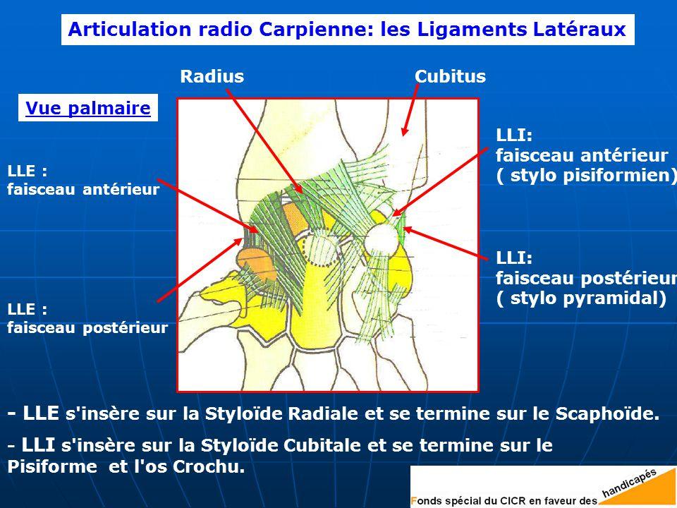 Articulation radio Carpienne: les Ligaments Latéraux