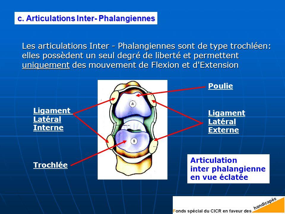 c. Articulations Inter- Phalangiennes
