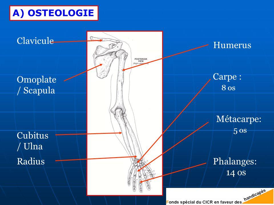 A) OSTEOLOGIE Clavicule. Humerus. Omoplate. / Scapula. Carpe : 8 os. Métacarpe: 5 os. Cubitus.