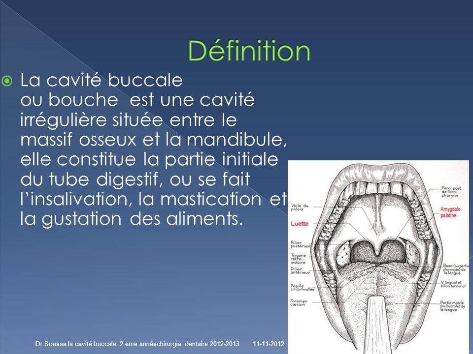 Atemberaubend Orale Anatomie Definition Galerie - Menschliche ...