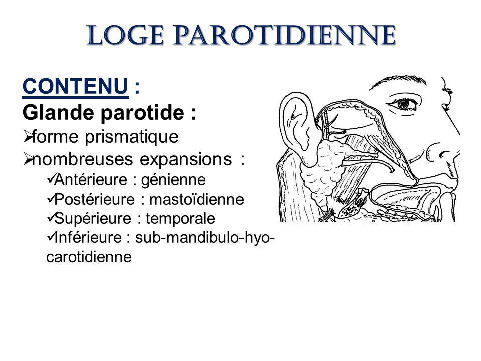 Loge parotidienne CONTENU : Glande parotide : forme prismatique