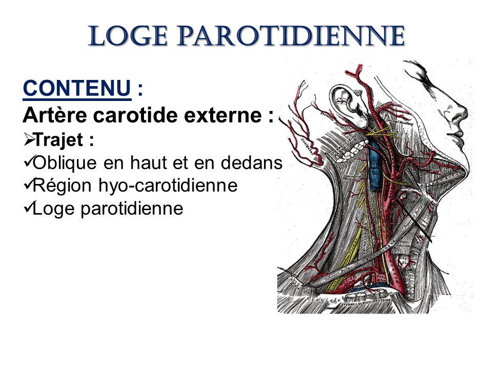 Loge parotidienne CONTENU : Artère carotide externe : Trajet :