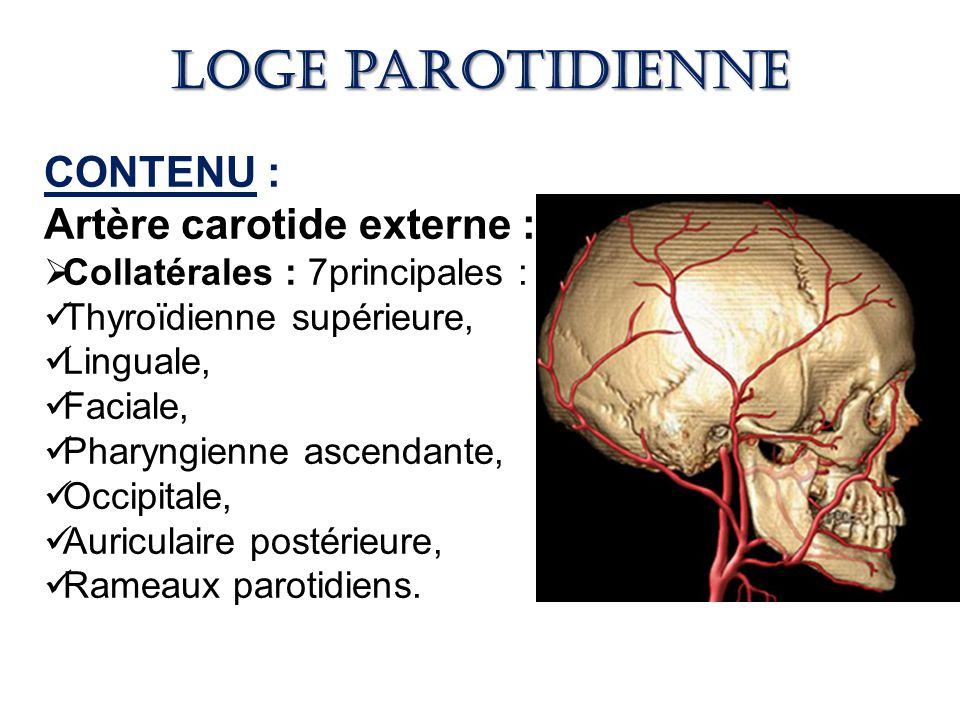 Loge parotidienne CONTENU : Artère carotide externe :