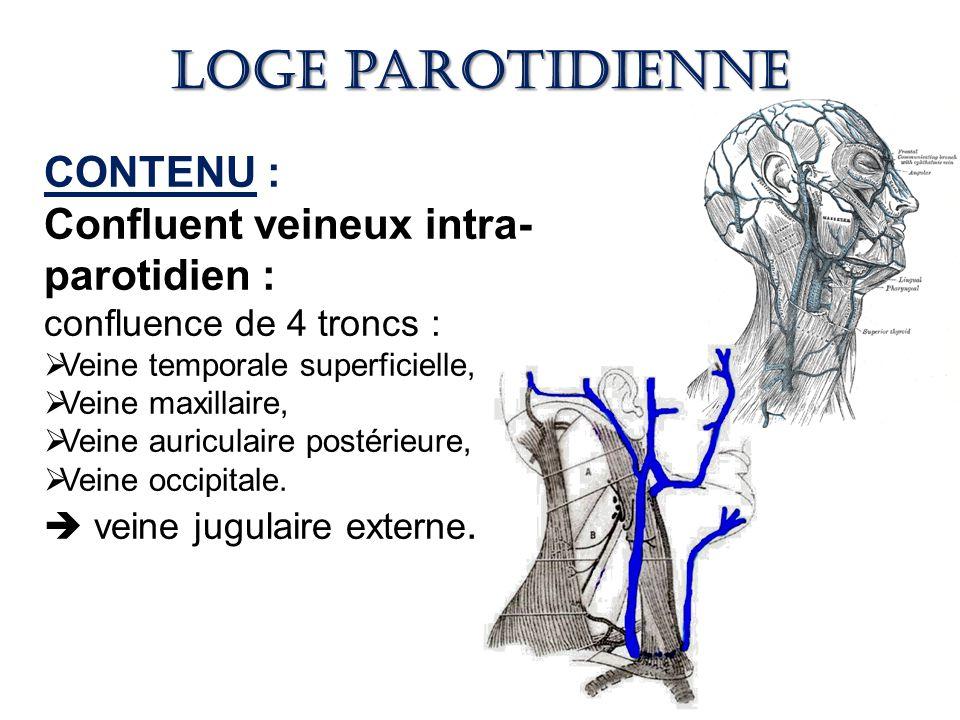 Loge parotidienne CONTENU : Confluent veineux intra-parotidien :