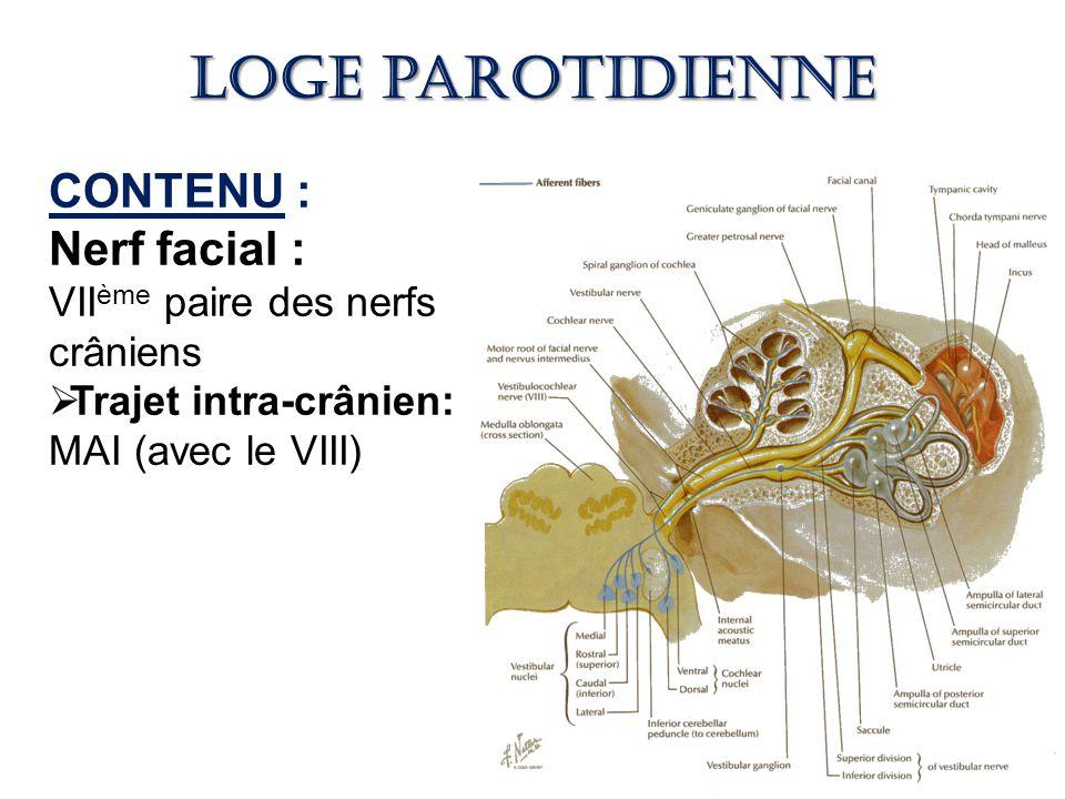 Loge parotidienne CONTENU : Nerf facial :