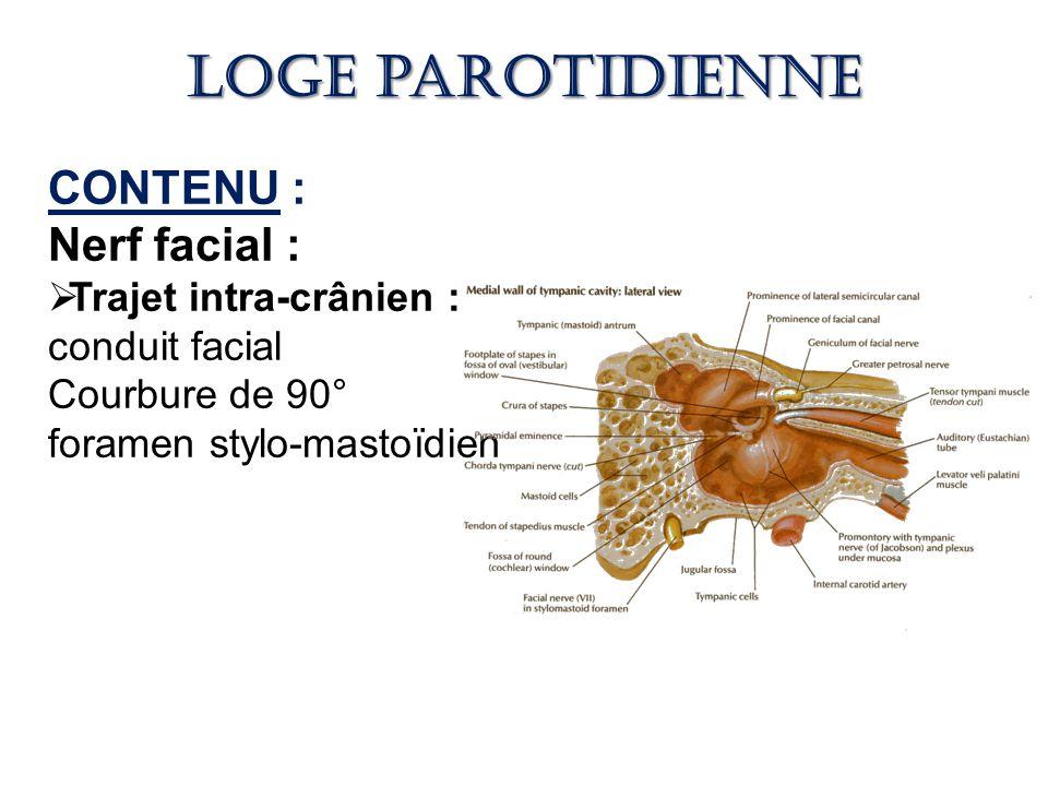 Loge parotidienne CONTENU : Nerf facial : Trajet intra-crânien :