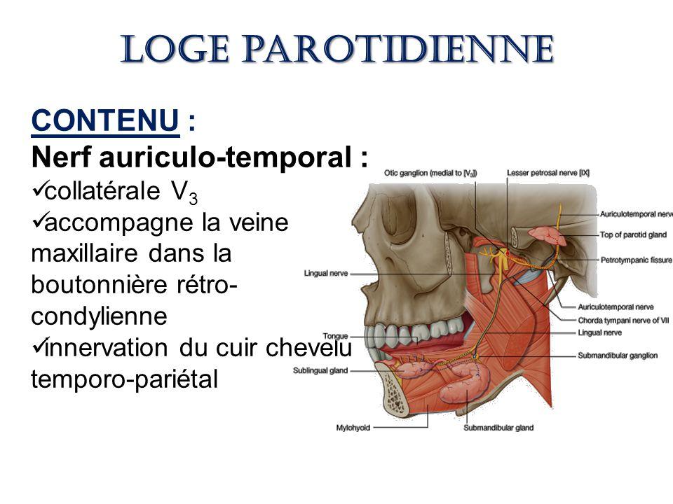 Loge parotidienne CONTENU : Nerf auriculo-temporal : collatérale V3