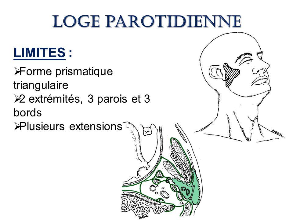 Loge parotidienne LIMITES : Forme prismatique triangulaire
