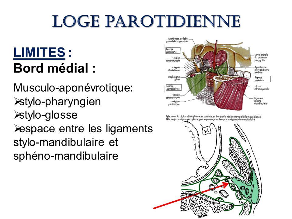 Loge parotidienne LIMITES : Bord médial : Musculo-aponévrotique: