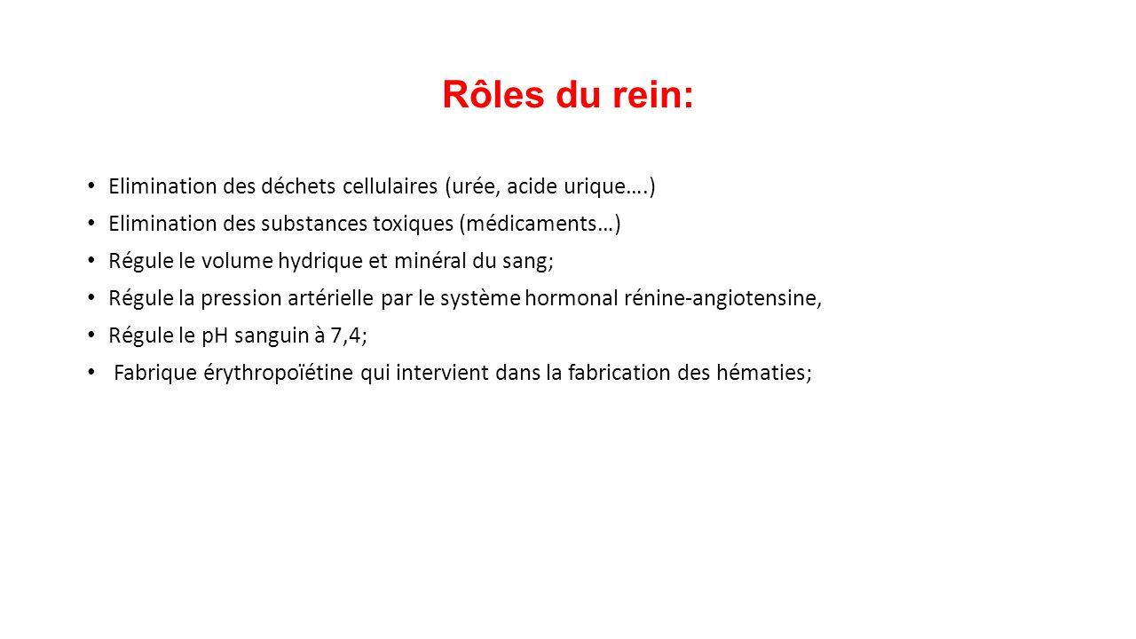 Rôles du rein: Elimination des déchets cellulaires (urée, acide urique….) Elimination des substances toxiques (médicaments…)
