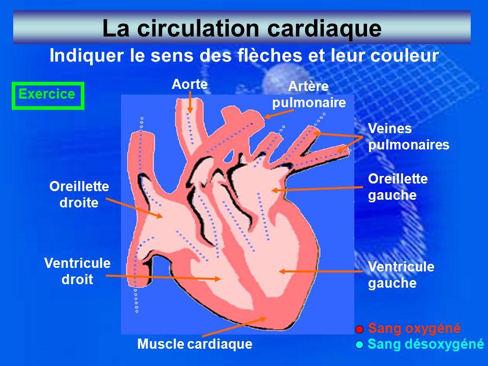La circulation cardiaque Indiquer le sens des flèches et leur couleur