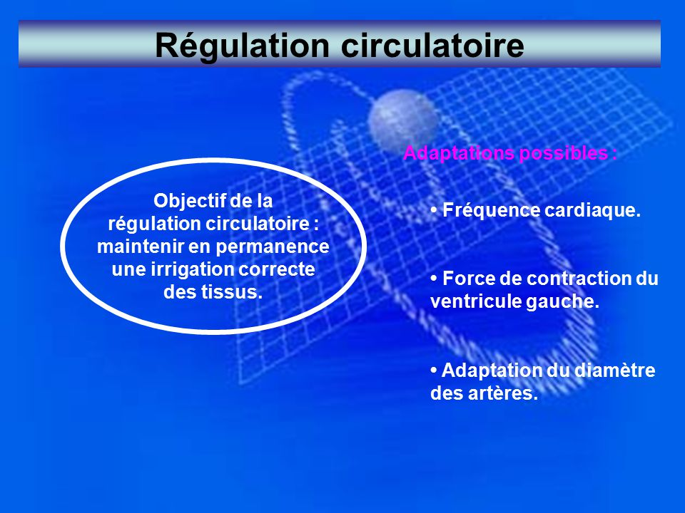 Régulation circulatoire