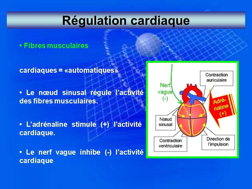 Régulation cardiaque • Fibres musculaires cardiaques = «automatiques»