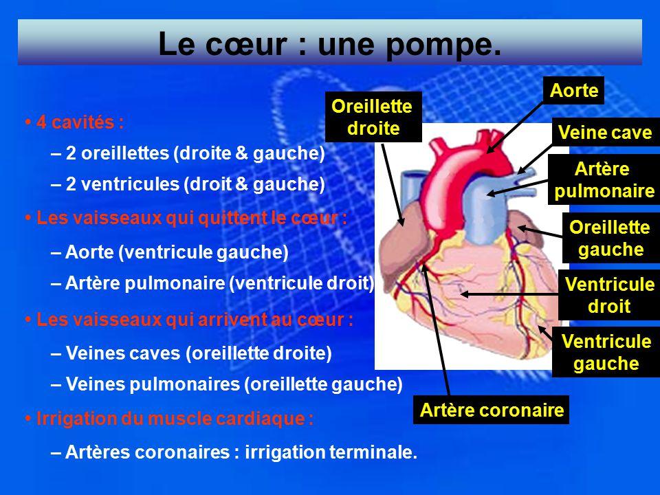 Le cœur : une pompe. Aorte Oreillette droite • 4 cavités : Veine cave