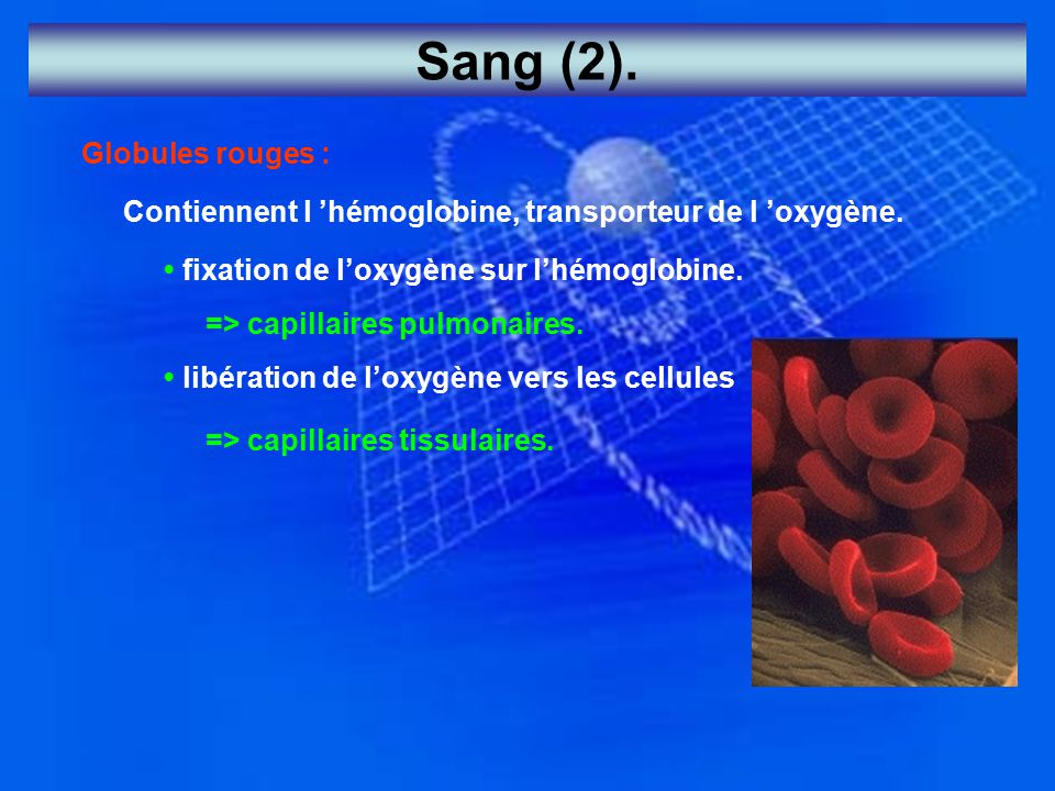 Sang (2). Globules rouges :