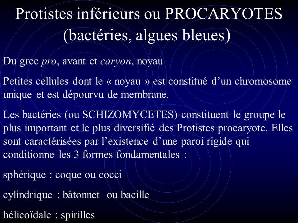 Protistes inférieurs ou PROCARYOTES (bactéries, algues bleues)