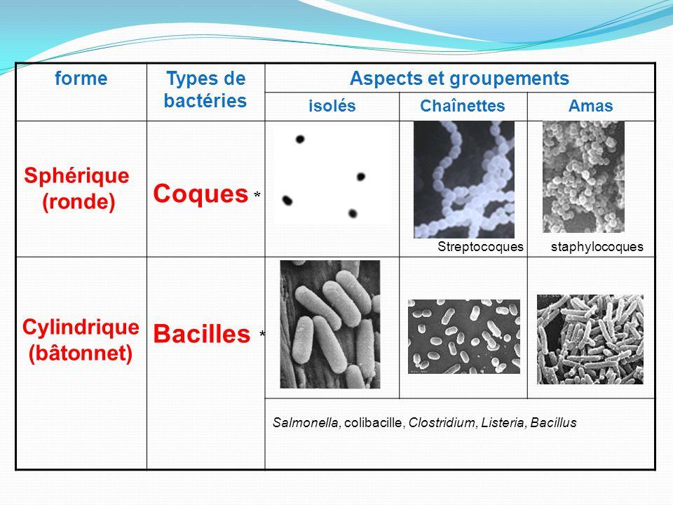 Aspects et groupements Cylindrique (bâtonnet)