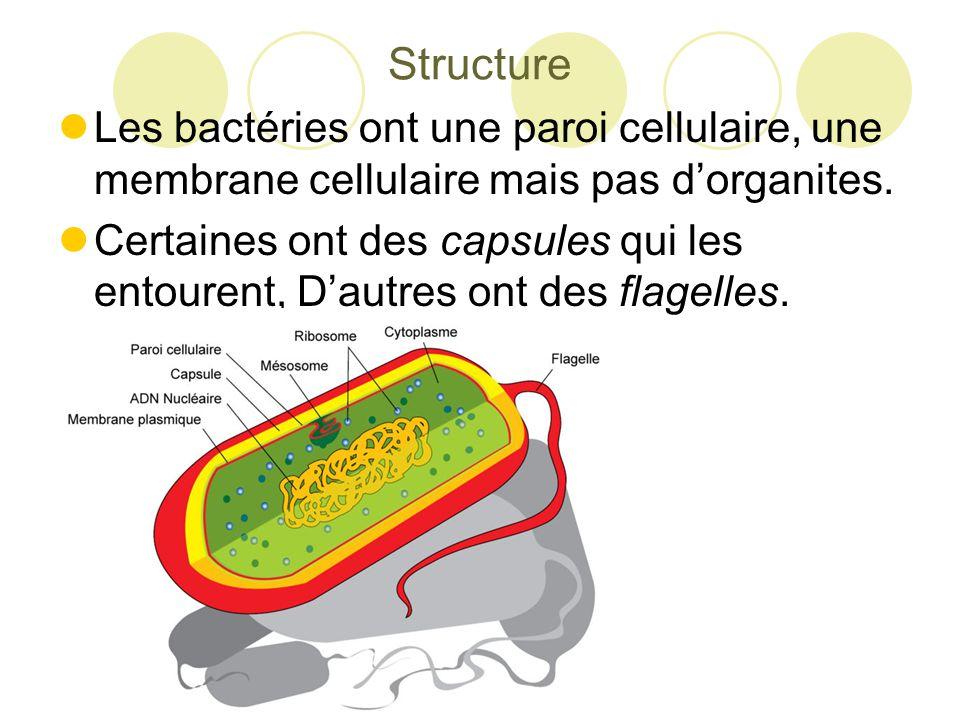 Structure Les bactéries ont une paroi cellulaire, une membrane cellulaire mais pas d'organites.