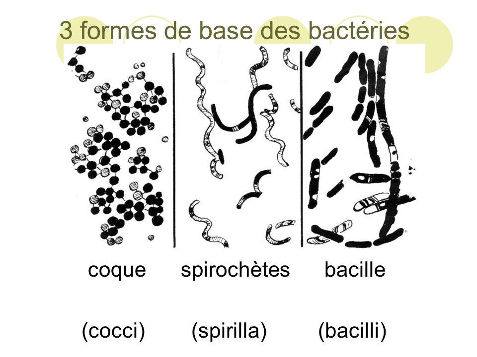 3 formes de base des bactéries