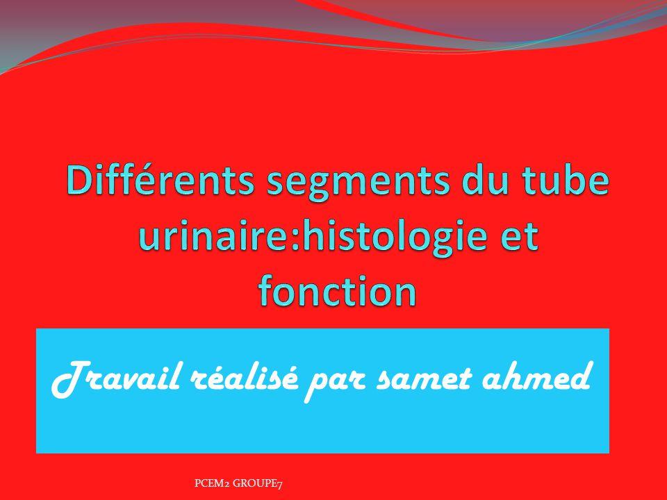 Diff rents segments du tube urinaire histologie et for Chambre urinaire
