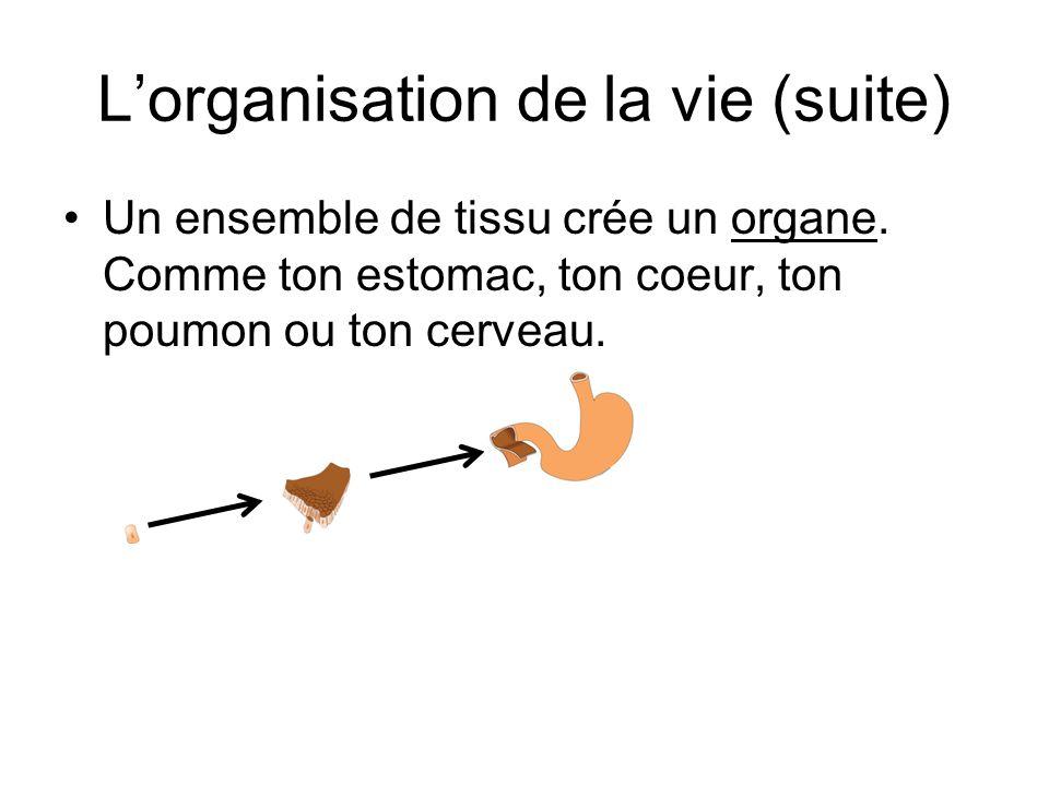L'organisation de la vie (suite)