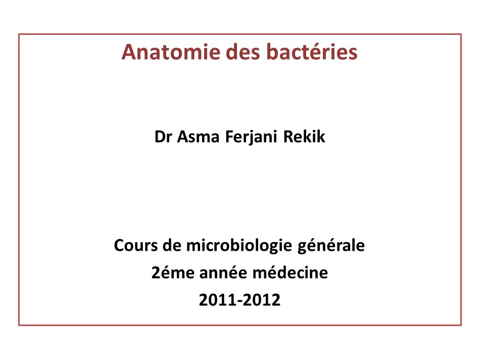 Anatomie des bactéries