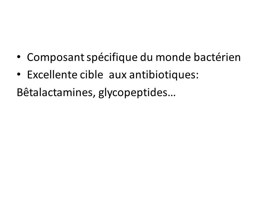 Composant spécifique du monde bactérien
