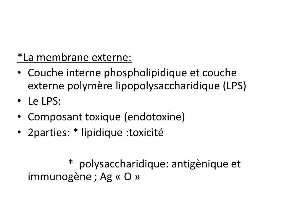 *La membrane externe: Couche interne phospholipidique et couche externe polymère lipopolysaccharidique (LPS)
