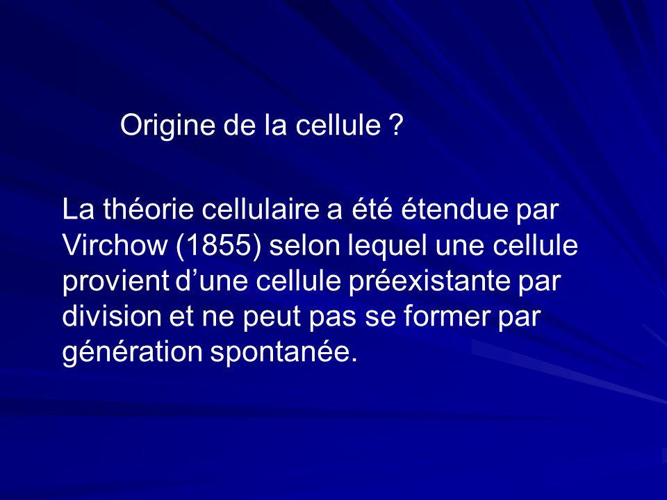 Origine de la cellule