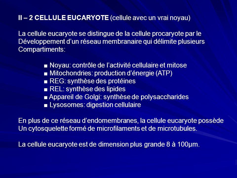 II – 2 CELLULE EUCARYOTE (cellule avec un vrai noyau)
