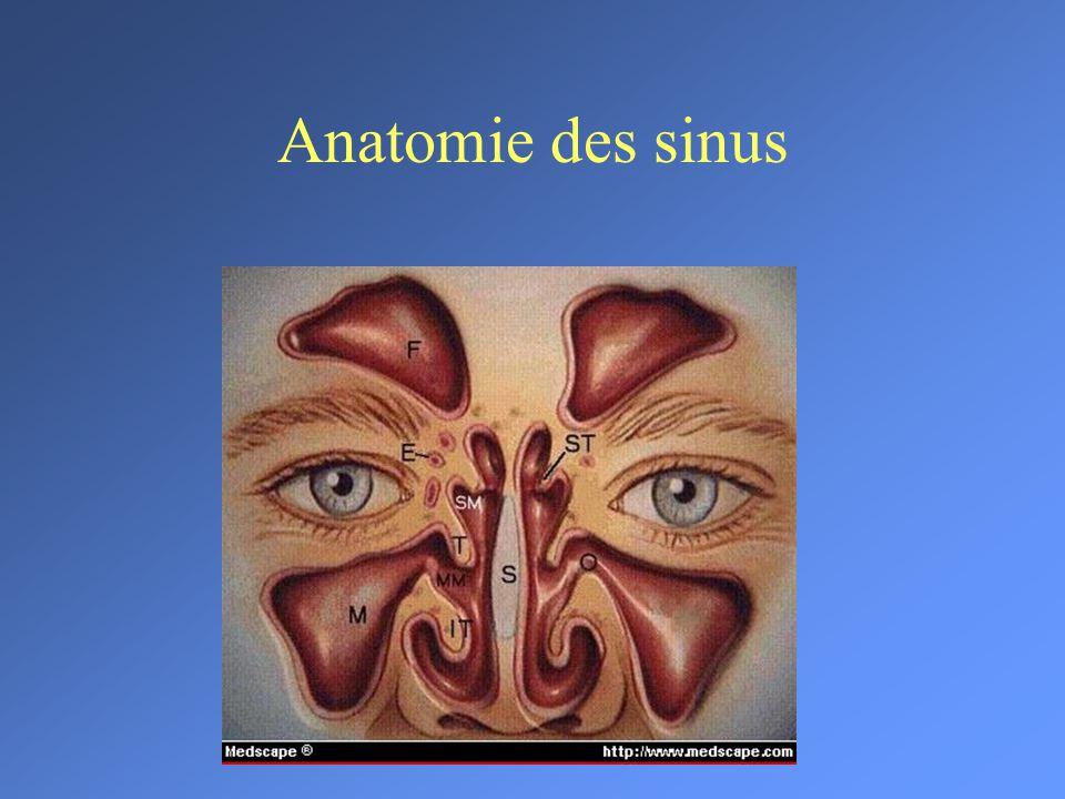 Groß Anatomie Und Physiologie Des Schlaganfalls Ppt Fotos ...