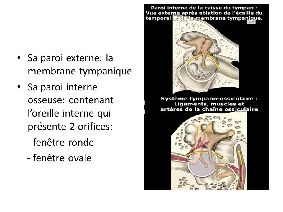 Chu de bejaia service d orl et de chirurgie cervico for Fenetre ovale oreille