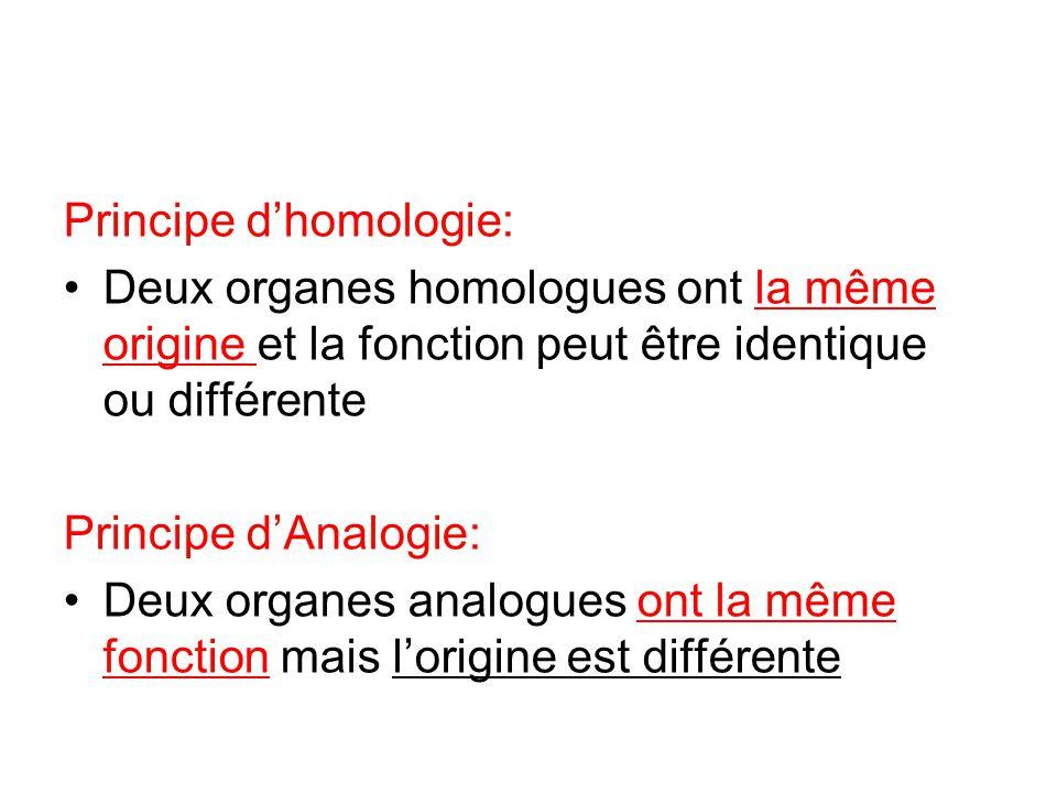 Principe d'homologie: