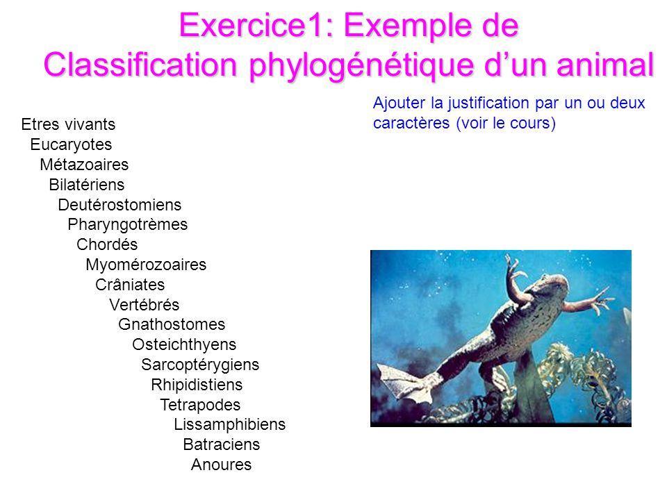 Exercice1: Exemple de Classification phylogénétique d'un animal