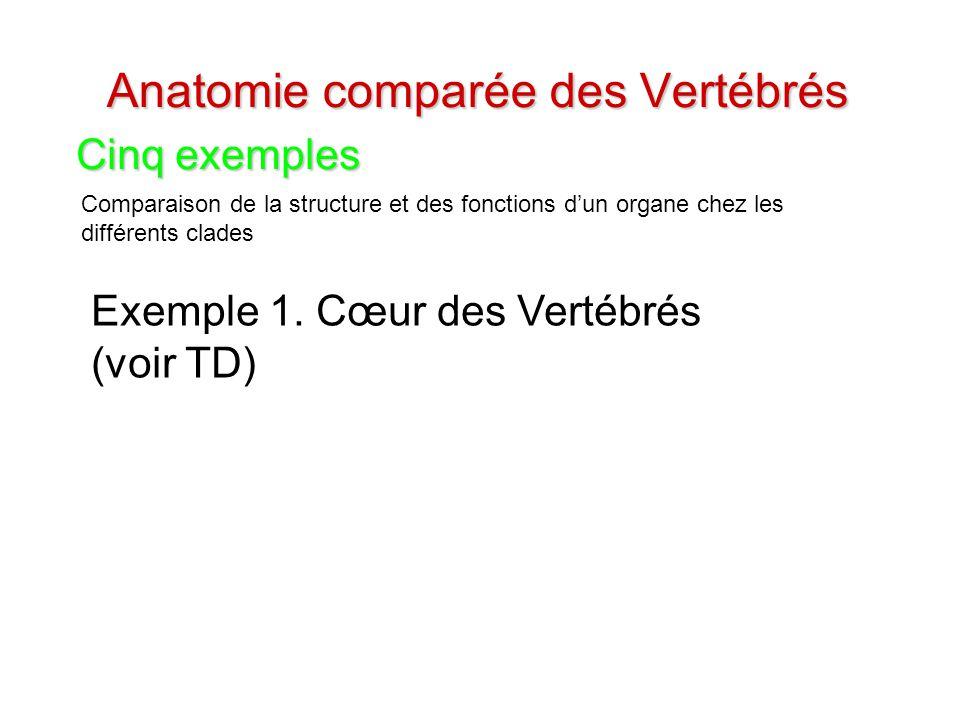 Anatomie comparée des Vertébrés