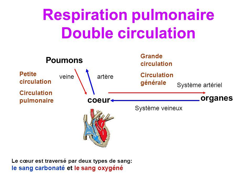 Respiration pulmonaire Double circulation
