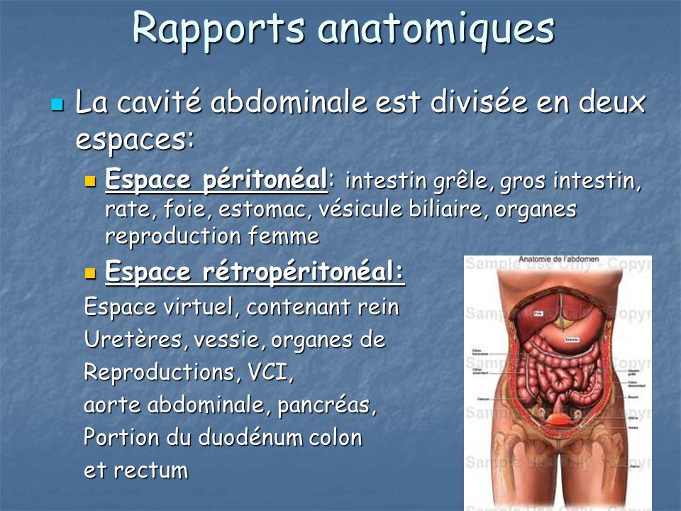 Rapports anatomiques La cavité abdominale est divisée en deux espaces: