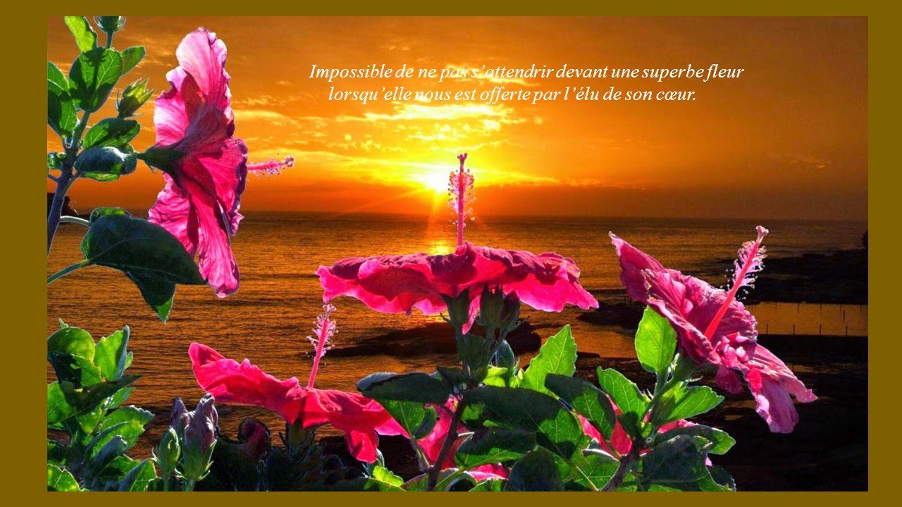 La tendresse des fleurs ppt t l charger for Ecran photo sun