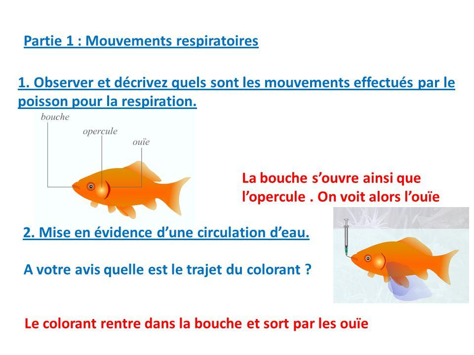 Activit 03 comment les animaux respirent ils dans l eau le poisson ppt t l charger - Comment deboucher une oreille bouchee par l eau ...
