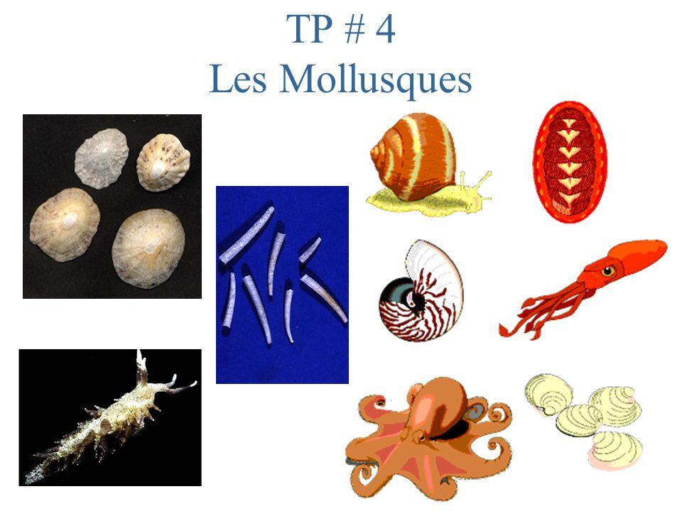 TP # 4 Les Mollusques