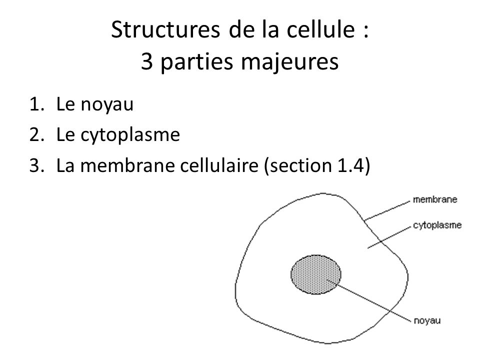 Structures de la cellule : 3 parties majeures