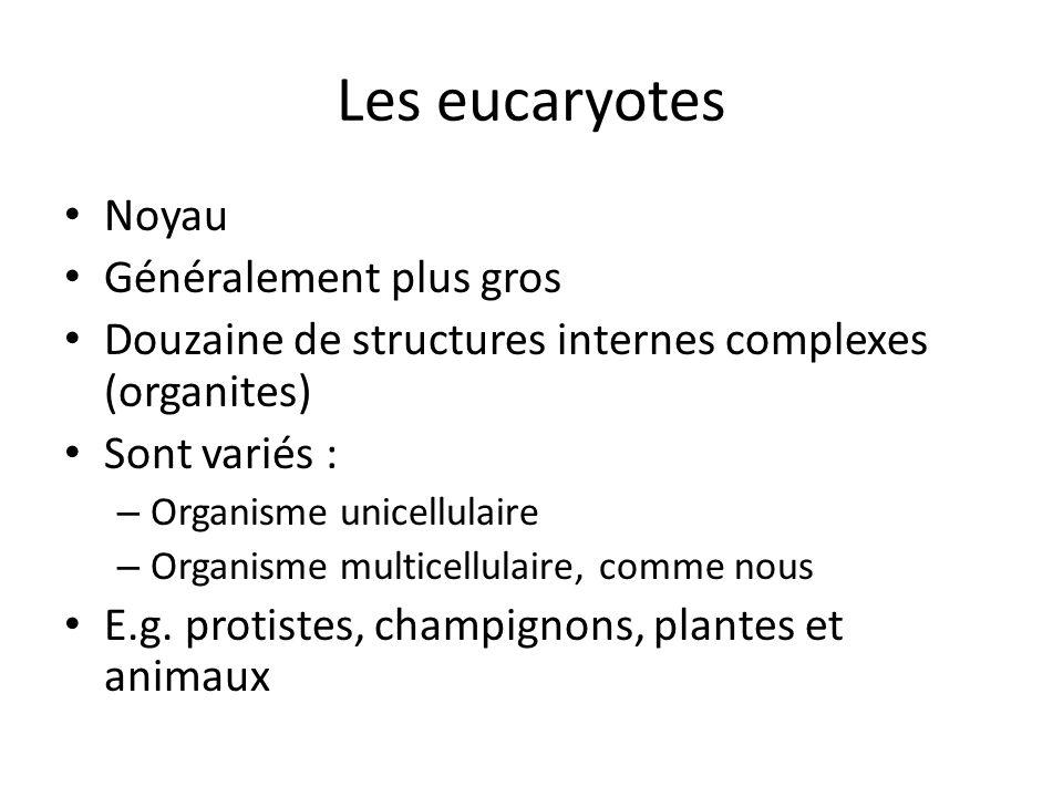 Les eucaryotes Noyau Généralement plus gros