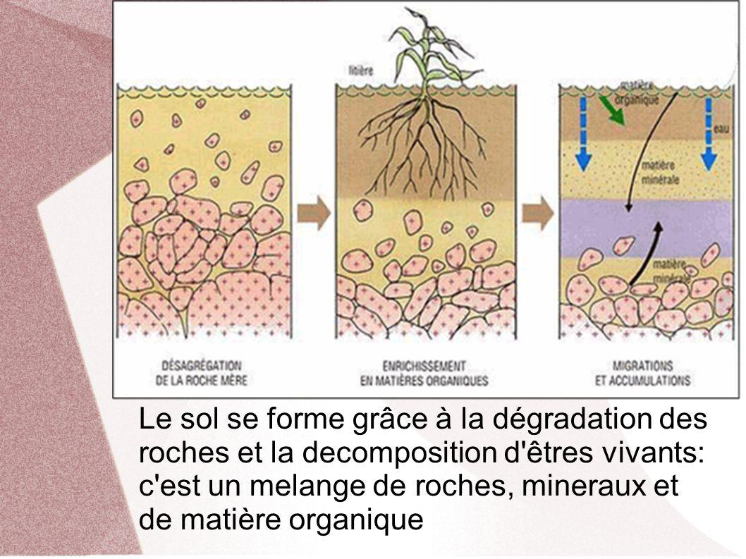 Le sol se forme grâce à la dégradation des roches et la decomposition d êtres vivants: c est un melange de roches, mineraux et de matière organique