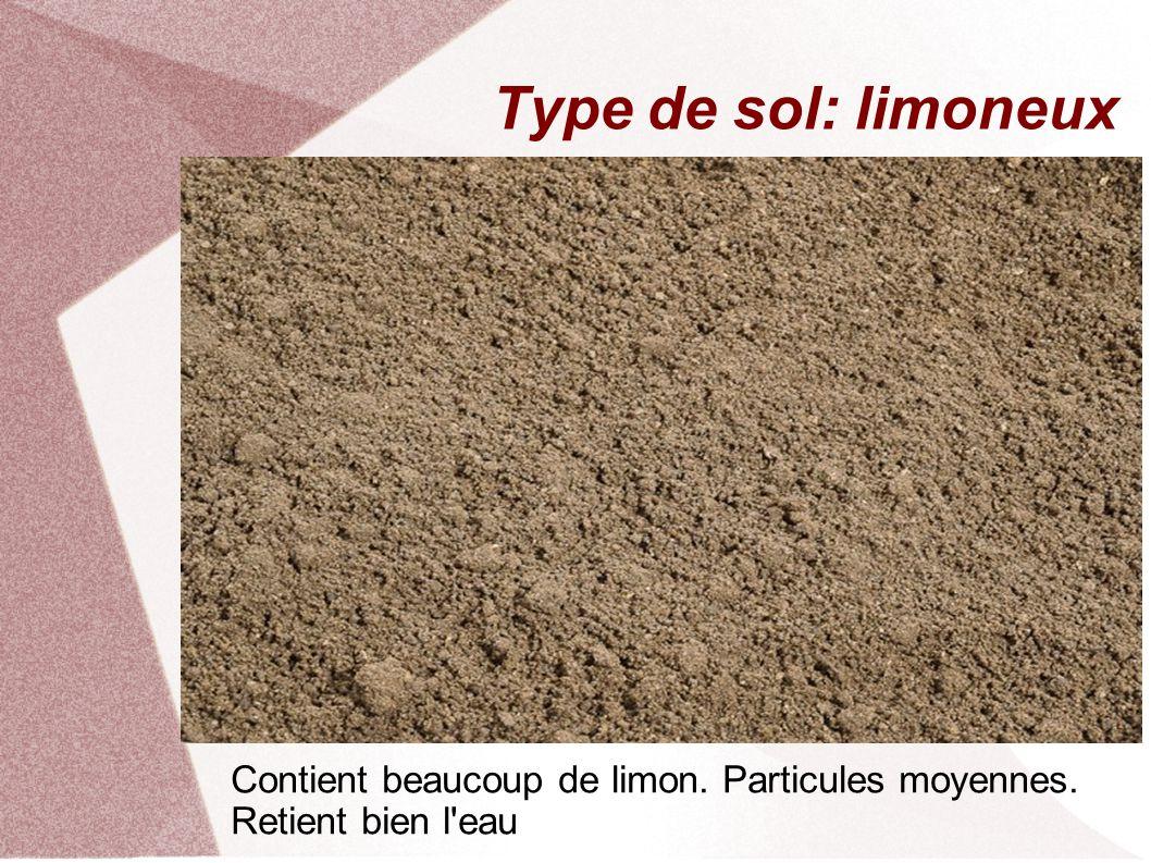 Type de sol: limoneux Contient beaucoup de limon. Particules moyennes. Retient bien l eau