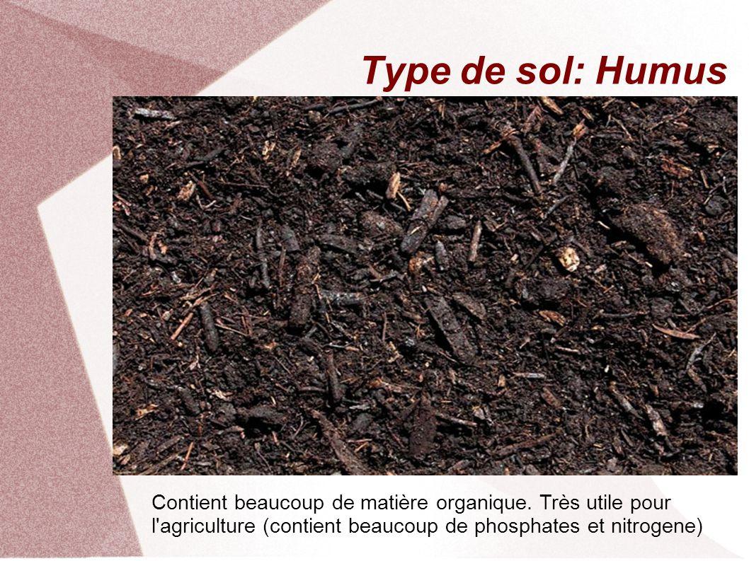 Type de sol: Humus Contient beaucoup de matière organique.