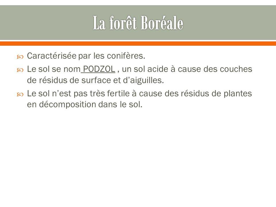 La forêt Boréale Caractérisée par les conifères.