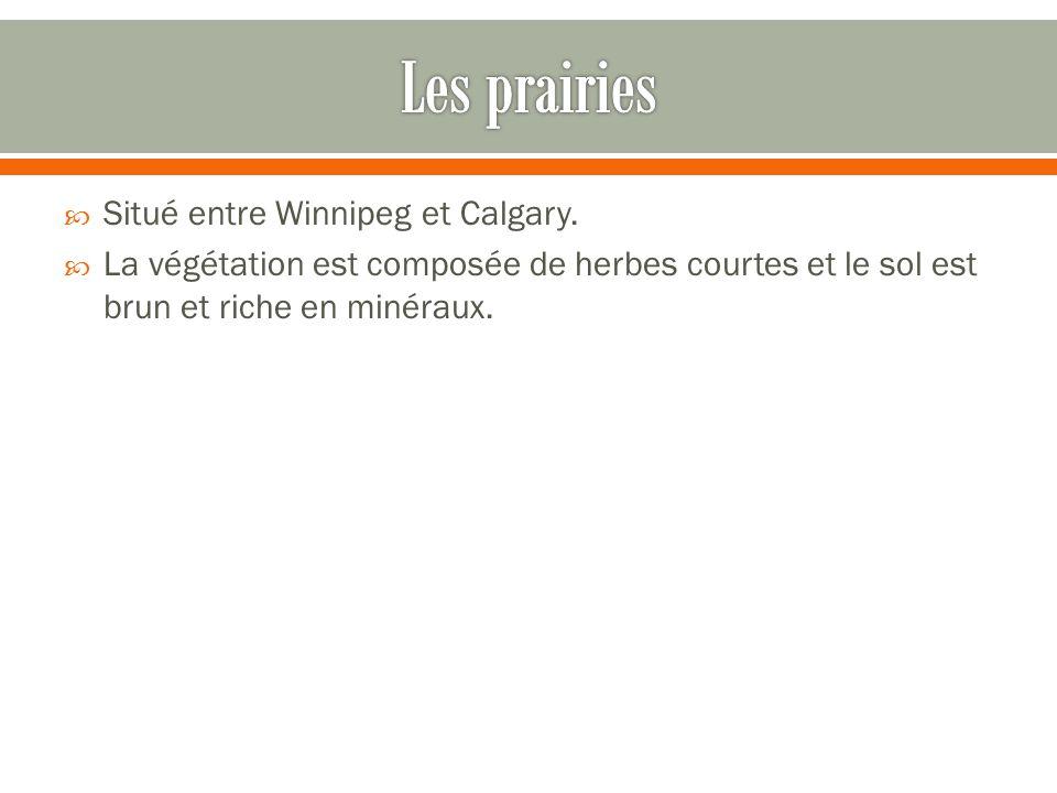 Les prairies Situé entre Winnipeg et Calgary.