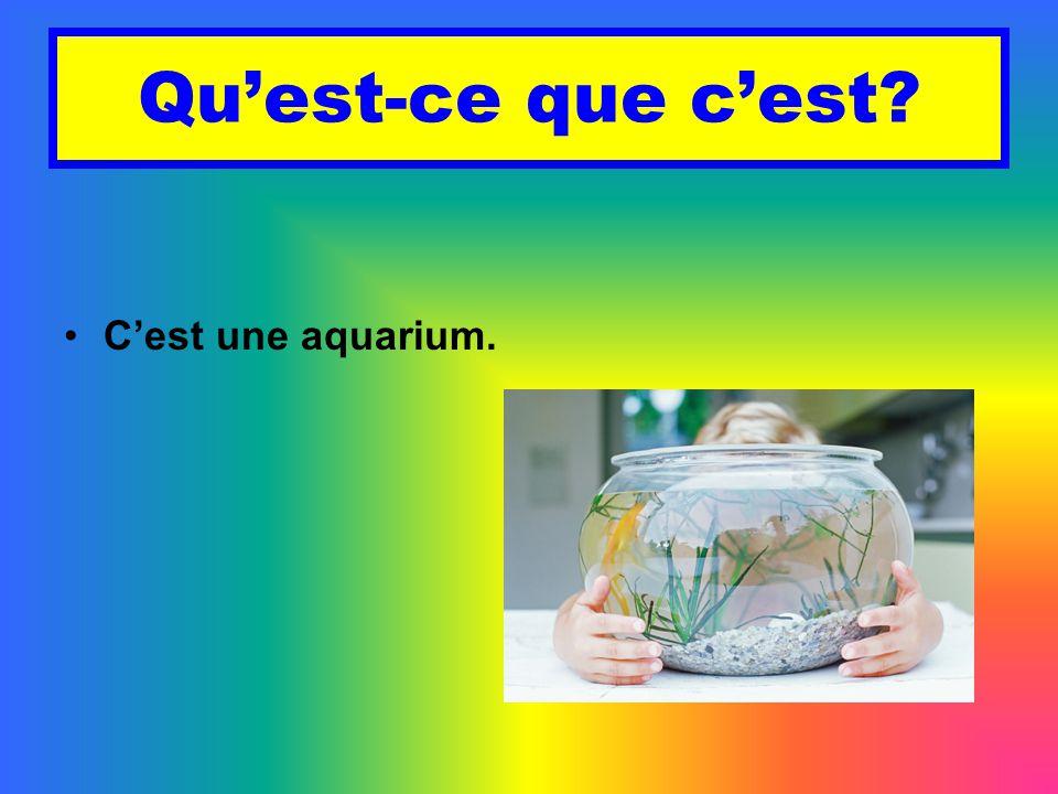 Qu'est-ce que c'est C'est une aquarium.
